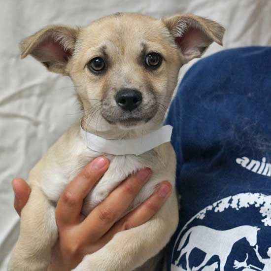 590da284da8 Dogs and Puppies for Adoption in San Diego