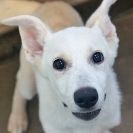 Dogs and Puppies for Adoption in San Diego | Helen Woodward Animal
