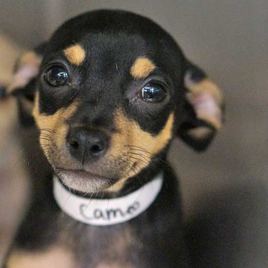 Dogs and Puppies for Adoption in San Diego | Helen Woodward