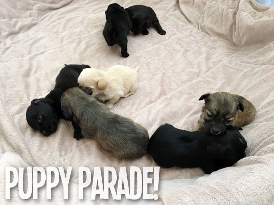 FollowTheLitter_NewYearNewLitter_Puppy Parade