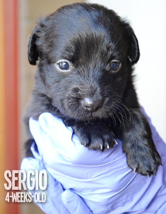 FollowTheLitter_NewYearNewLitter_Sergio 4 Weeks