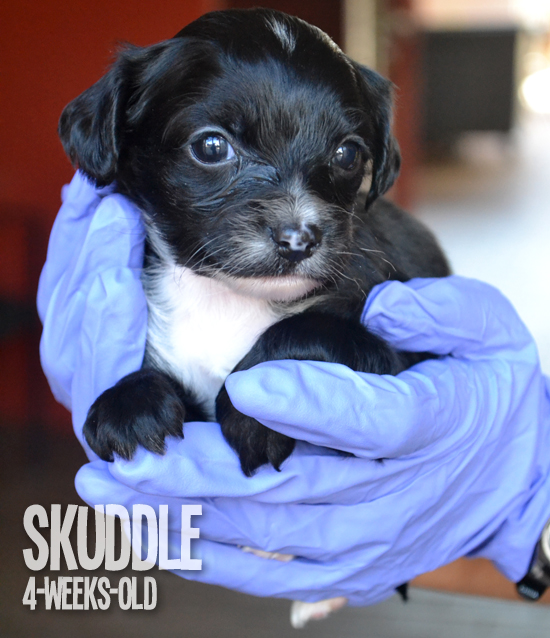 FollowTheLitter_NewYearNewLitter_Skuddle 4 Weeks