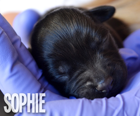 FollowTheLitter_NewYearNewLitter_Sophie 1 Week Old