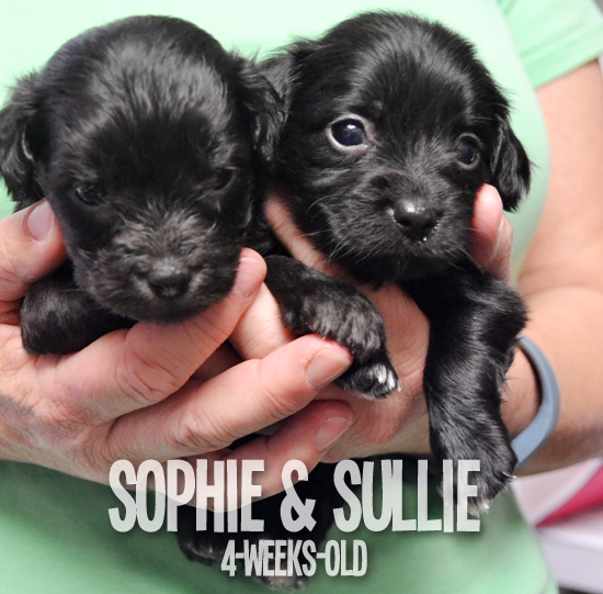 FollowTheLitter_NewYearNewLitter_Sophie and Sullie 4 Weeks