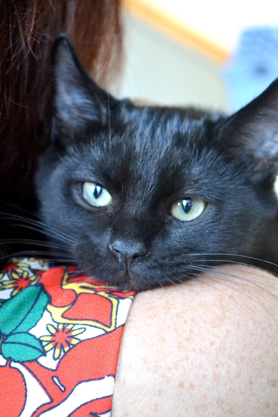 adopt a pet pet adoption in san diego helen woodward animal center