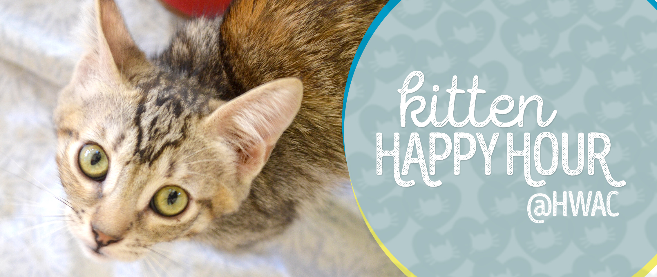 Kitten Adoption San Diego – Adopt a Kitten