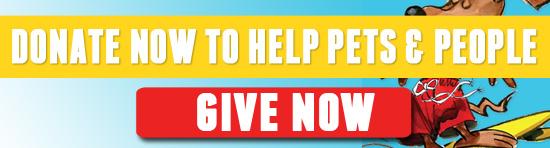 sd-livestream-donate-button