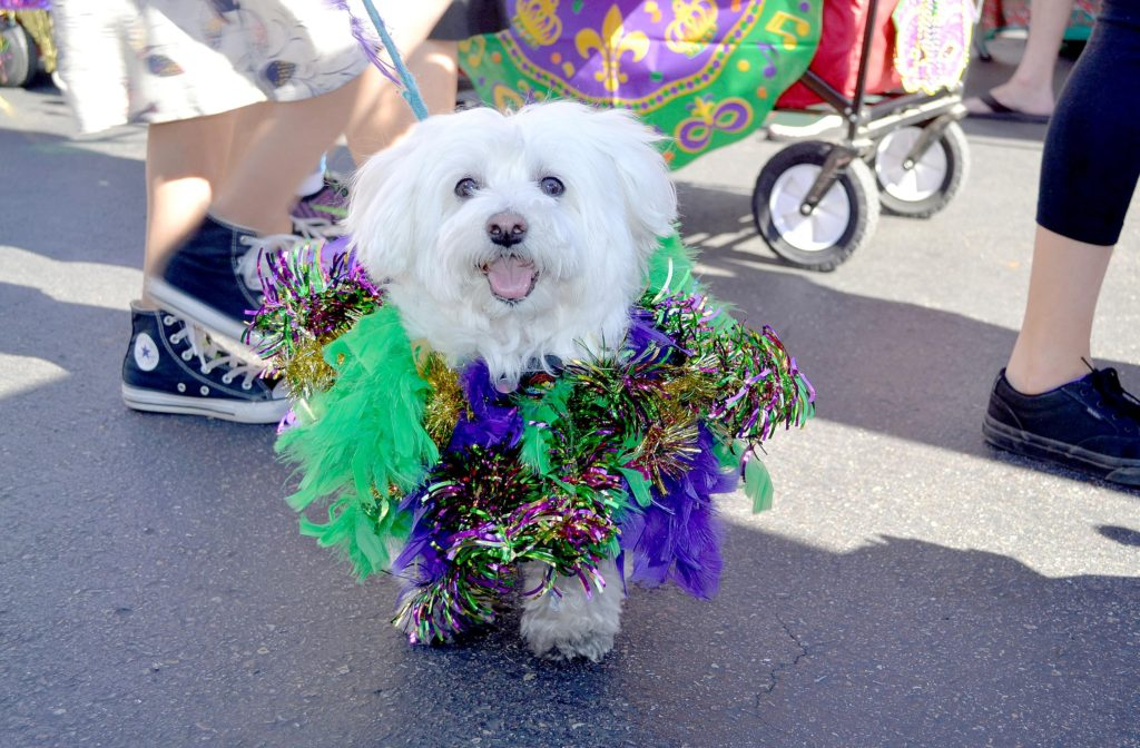 FIRST EVER DOGGIE GRAS 5K & PARADE MOVES PAWS FOR A GREAT