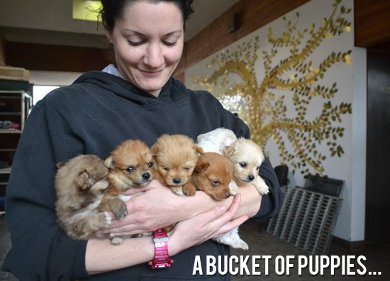 A Bucket of Puppies-1