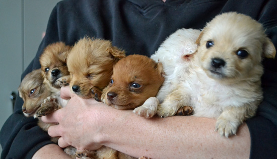 A Bucket of Puppies-2