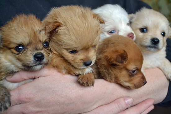 A Bucket of Puppies-3