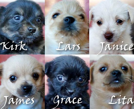 Junkyard Jammers Rock Star Puppies Seek Forever Homes Helen