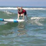 Press Release-Surfdoglessons-Cherie