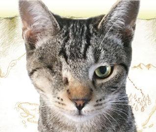 Dr. Finkelstein Pirate Cat