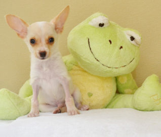 iPuppies Upgrade to Forever Homes