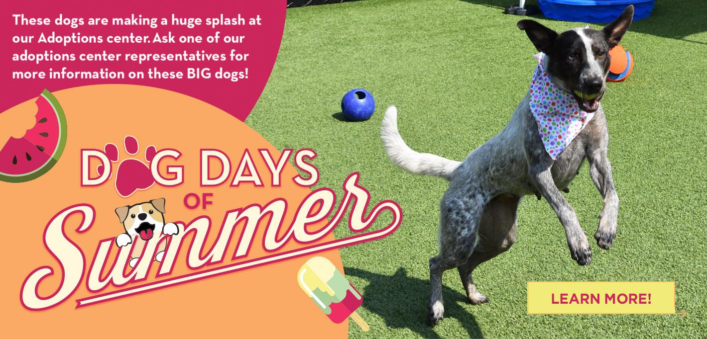 DV21_Dog Days of Summer_Slider FINAL