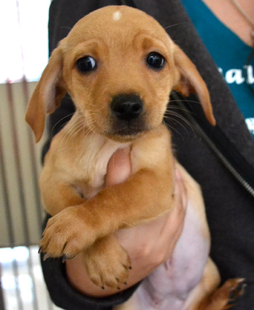 Puppies Abandoned with No Roof Over Their Heads - Helen ...