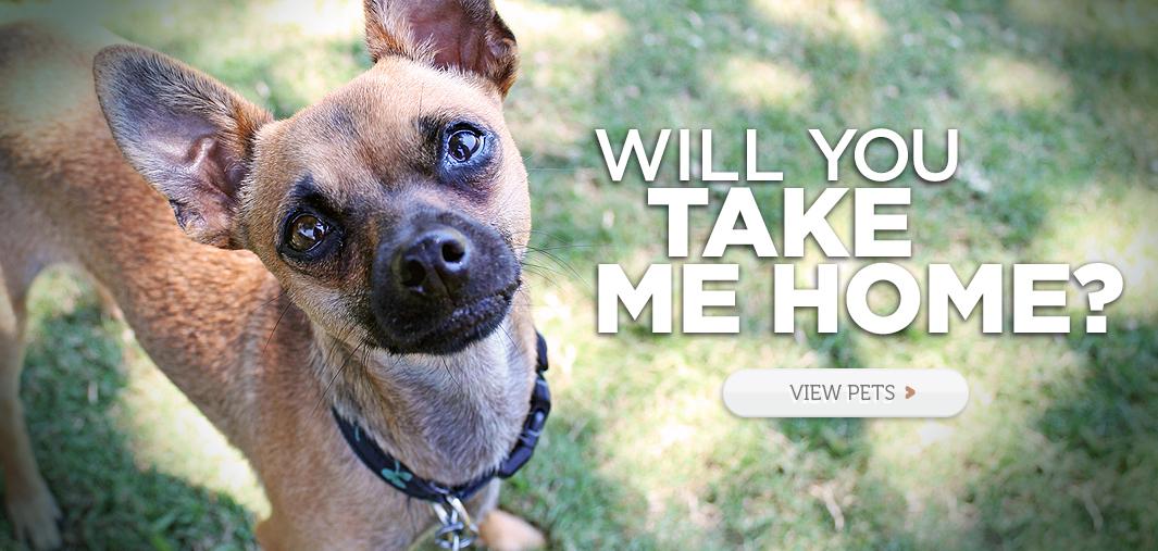 Adopt a Pet Today