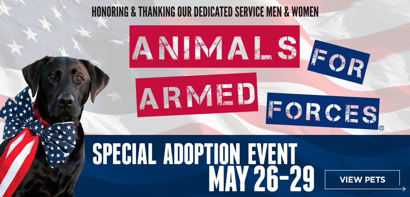 Slider17_AnimalsforArmedForces_MD
