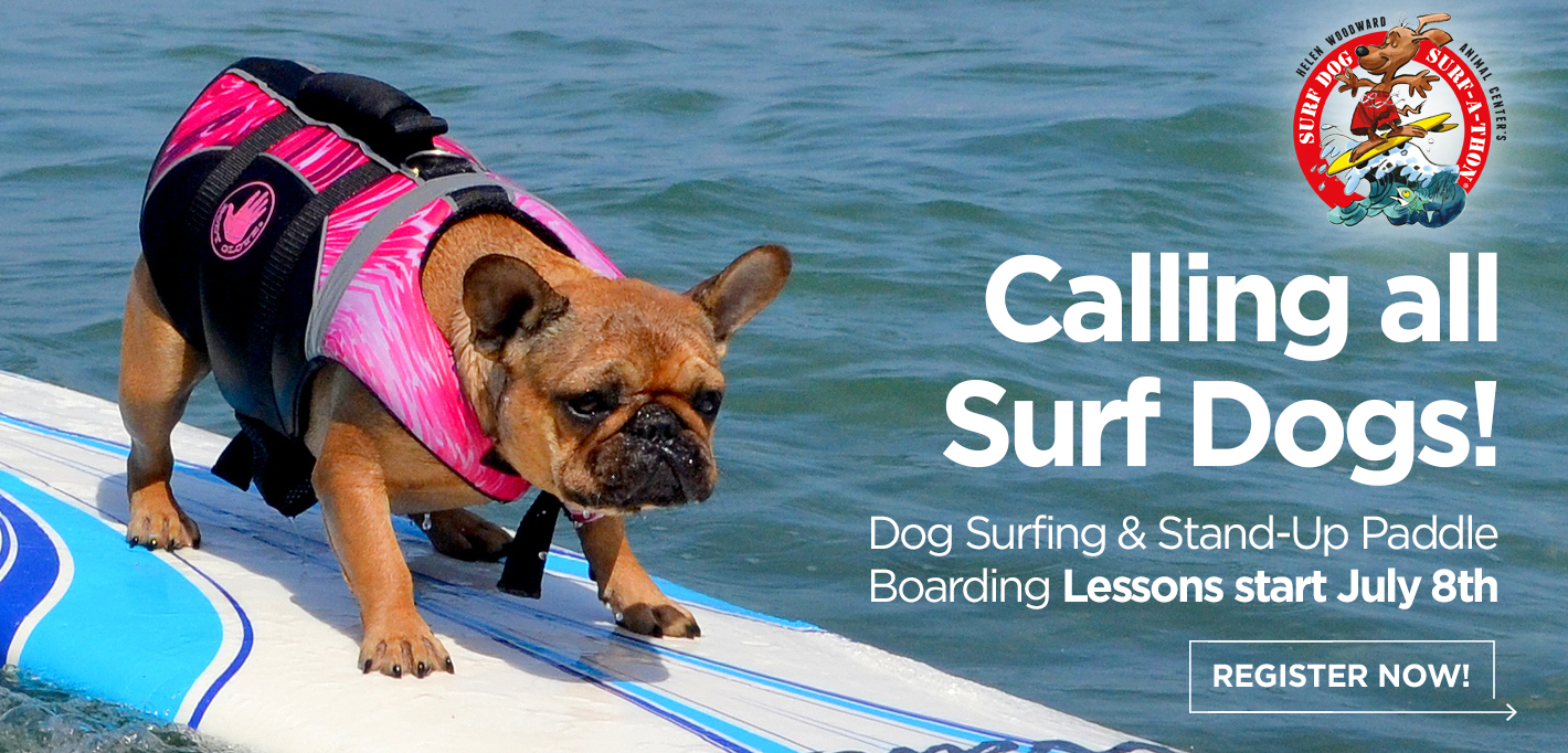Slider18_SurfDogLessons