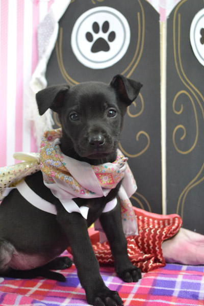 From Junkyard Puppies To Joyous Puppies A Galentine S