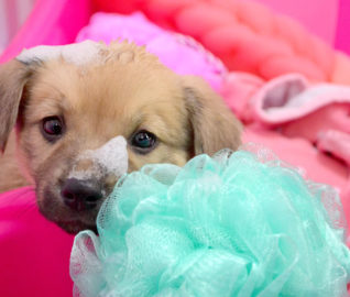From Junkyard Puppies to Joyous Puppies: A Galentine's Day Story