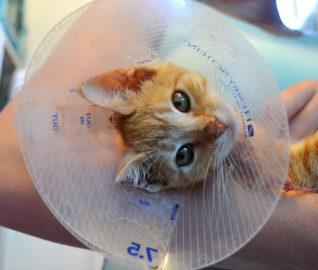 Kitten Found in Running Engine