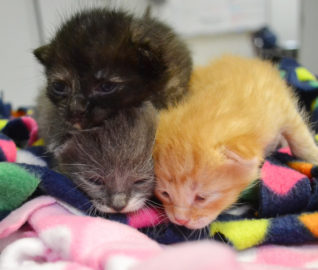 Tiny Cries Save Kittens' Lives