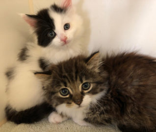 Kittens Trapped Inside Brick Wall
