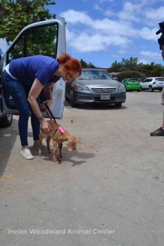 Millie arrives at Helen Woodward Animal Center - June 18, 2018