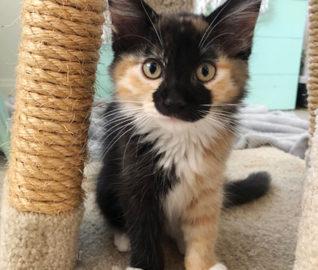 Kittens Dumped on Streets of LA