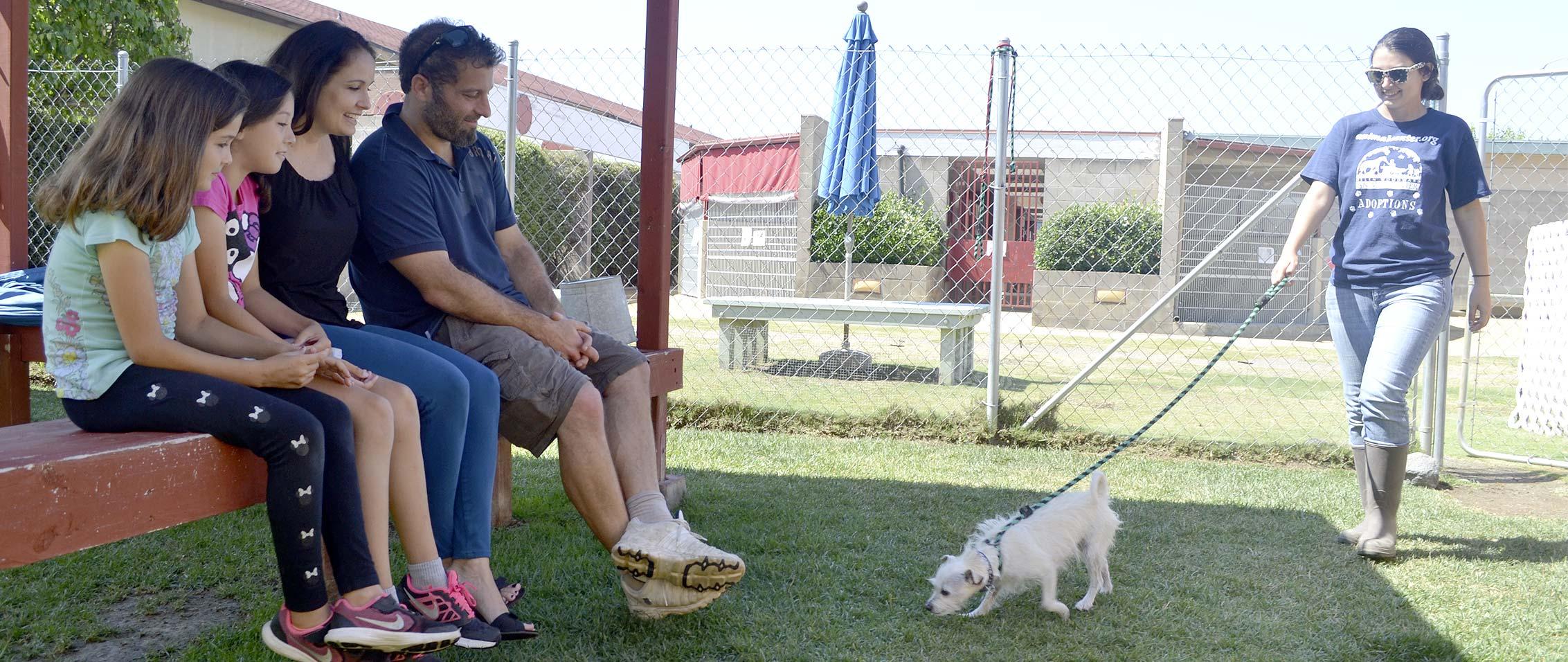 Animal Adoption How To Adopt A Pet Helen Woodward Animal Center