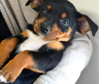 Puppy with Extreme Overbite Gets Outpouring of Love