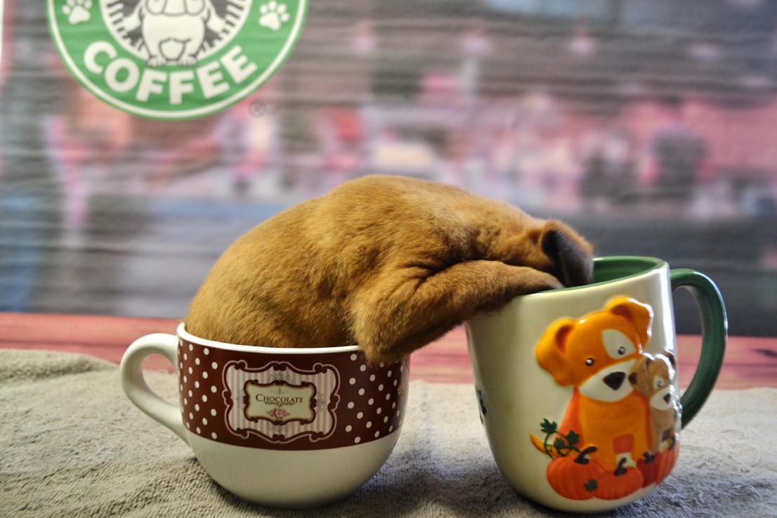 Head in Mug