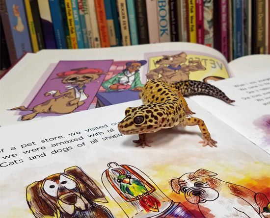 b8cd0248c0b Paws and Pages  Reading to Animals Program - Helen Woodward Animal ...