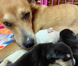 Mama Dog Rescued from San Diego Streets Just in Time