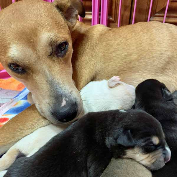 Canela and Puppies001