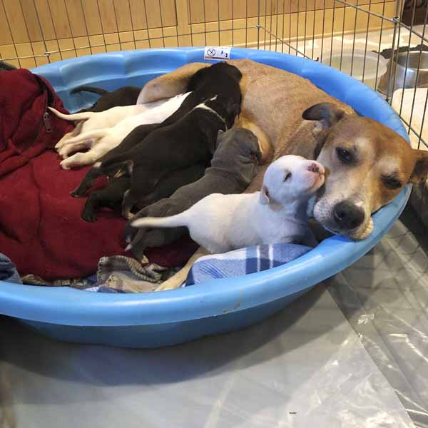 Canela and Puppies011
