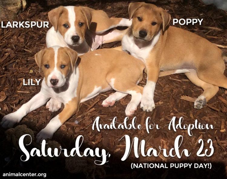 Flower Puppies Adoption Announcement - Helen Woodward Animal