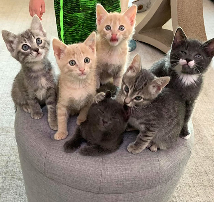 Kitten Adoption San Diego Adopt A Kitten Helen Woodward
