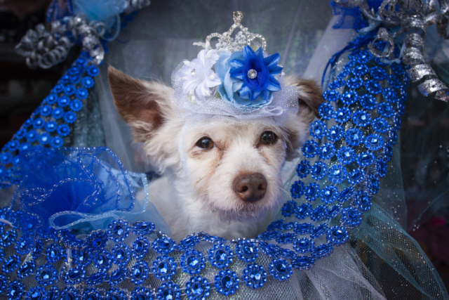 Helen Woodward Animal Center presents the 2019 Puppy Prom: A Furry Tail Ending