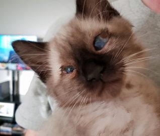 Blind Kitten Has Super Powers
