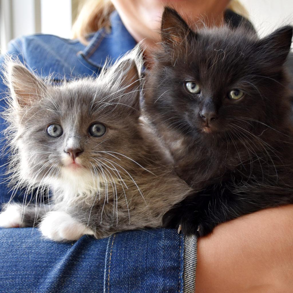 Kitten Adoption San Diego – Adopt a Kitten   Helen Woodward