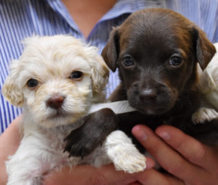 Nursing Dog Mom Adopts Orphaned Litter