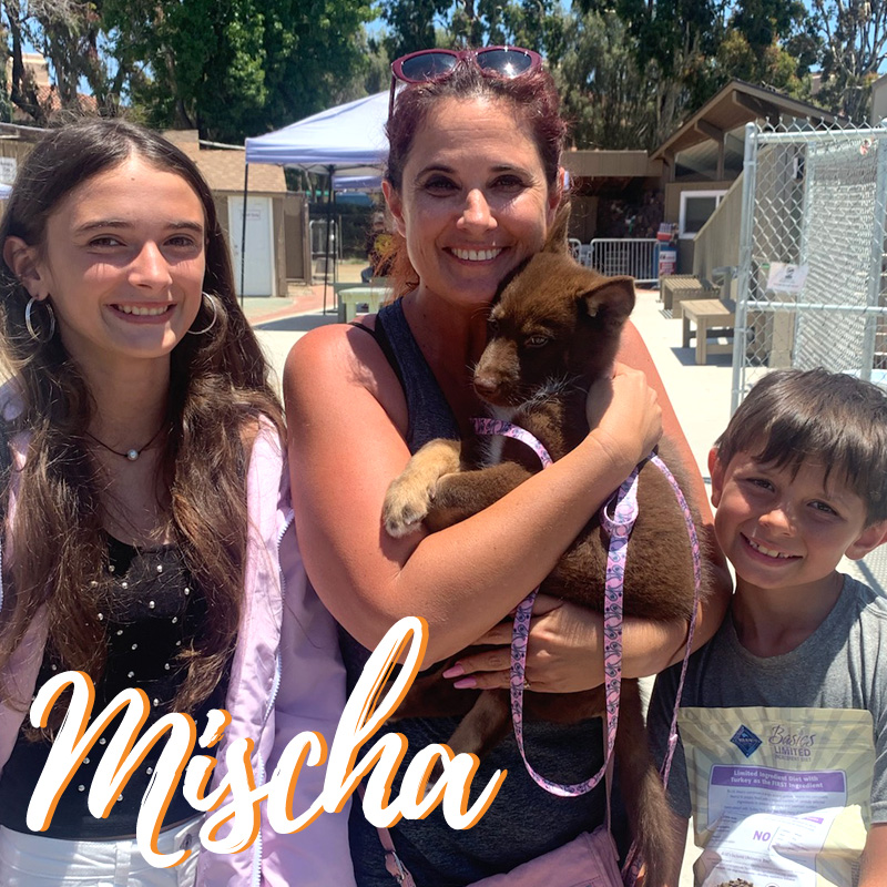 Mischa Adoption - web