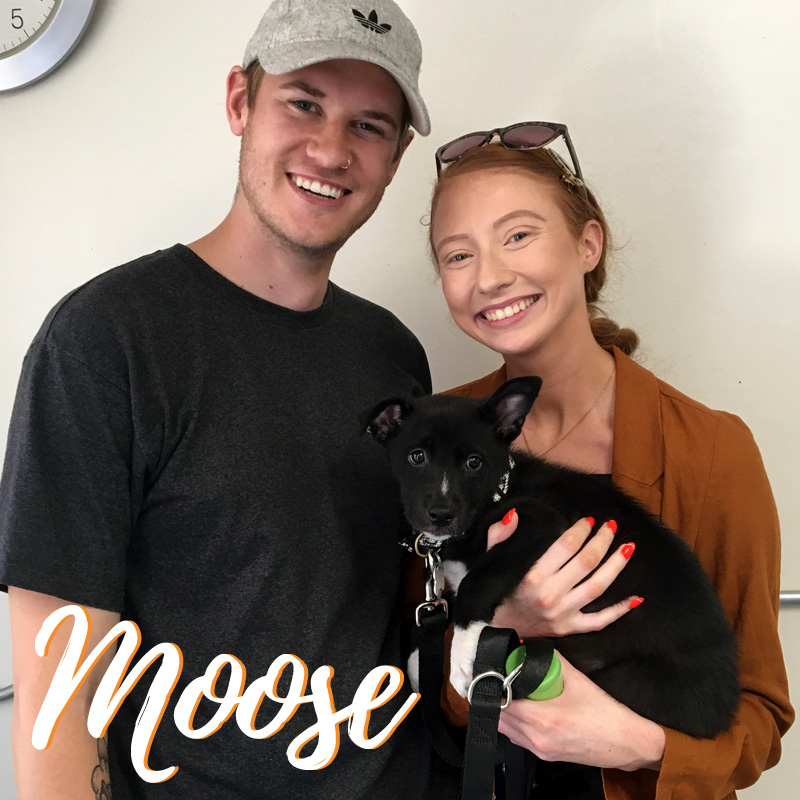 Moose Adoption - web