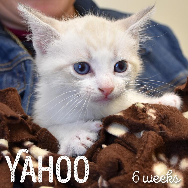 Kitten Adoption San Diego – Adopt a Kitten | Helen Woodward