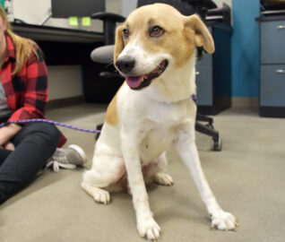 Texas Rescue Dog's Cinderella Story