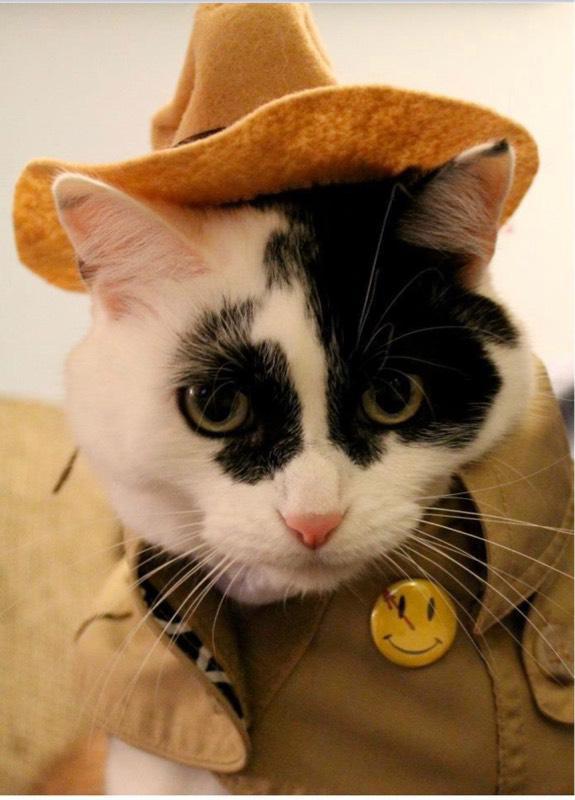 CatCosplay