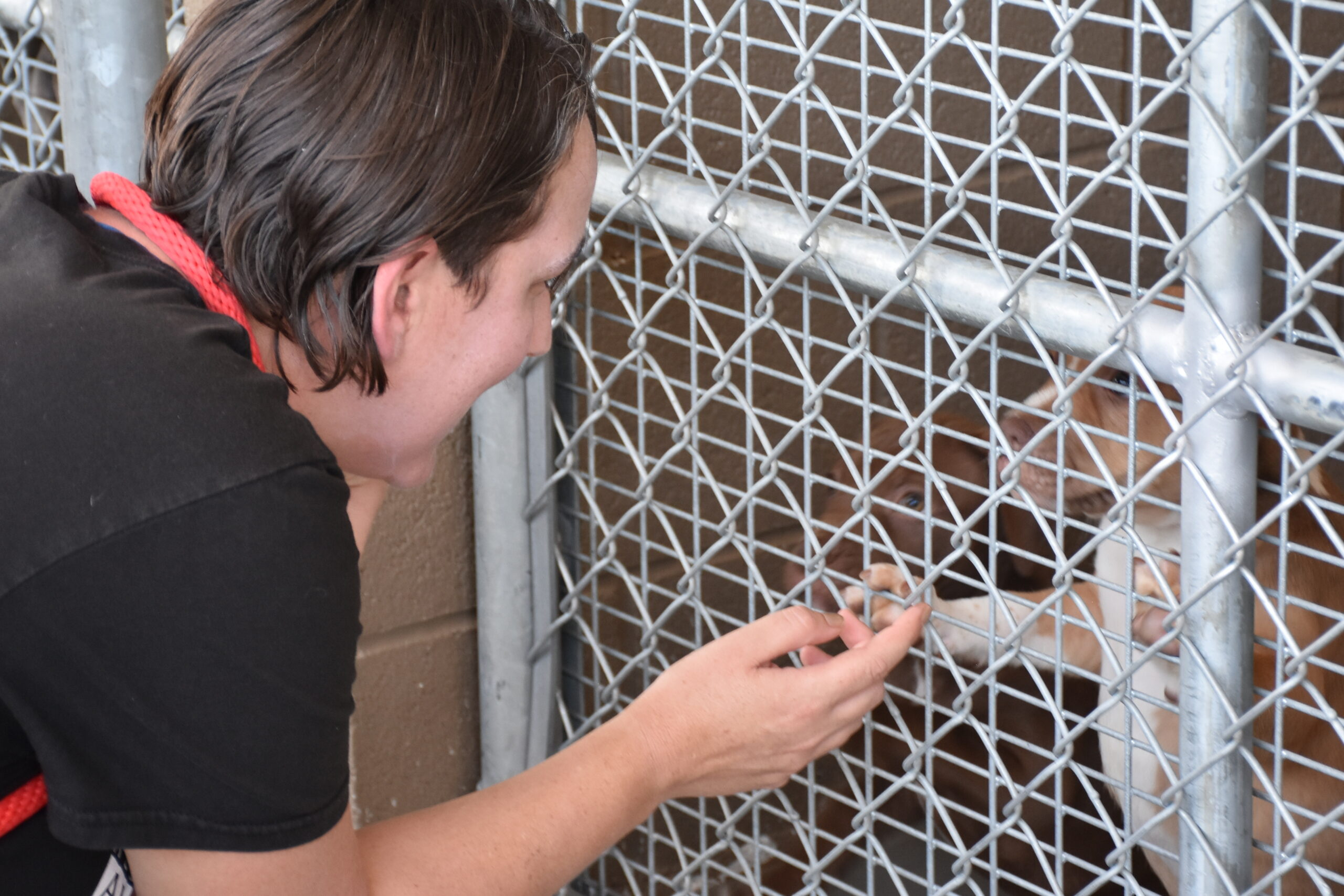 Adoption staff member meets orphan pups in need of transport